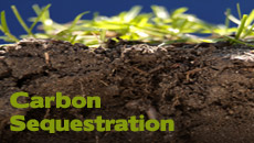 Click to read more about Carbon Sequestration